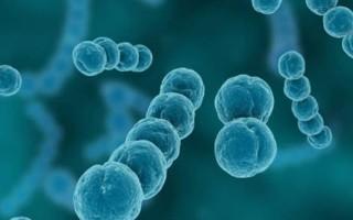 Гемолитический стрептококк: лечение гемолитикуса