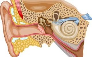 Каковы причины шума и заложенности в ушах?
