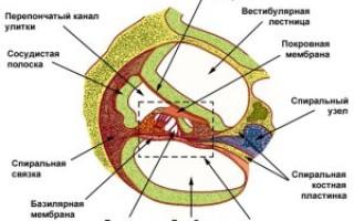 Причины и лечение сенсоневральной тугоухости