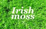 Лечебные свойства ирландского мха, рецепты и отзывы