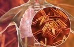 Микобактерия туберкулёза (mycobacterium tuberculosis)