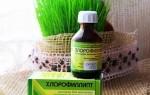 Хлорофиллипт для горла — инструкция по применению