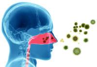 бактерии в горле
