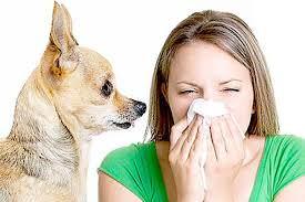 аллергены в носу
