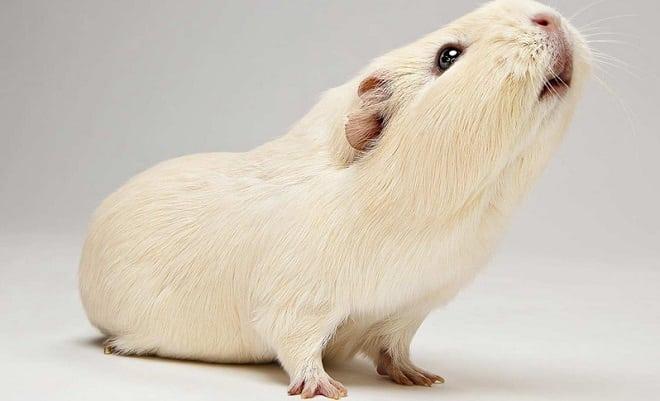 мышь для исследований