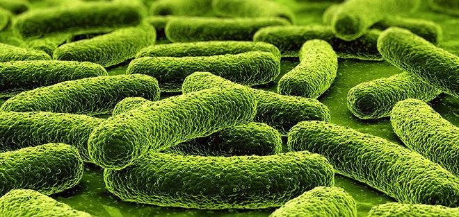 микобактерия туберкулёза