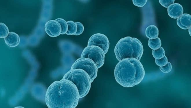 инфекция стрептококк