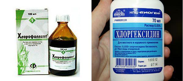 Хлорофиллипт или хлоргексидин?