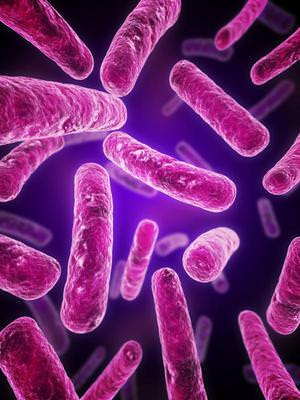 аэробные бактерии