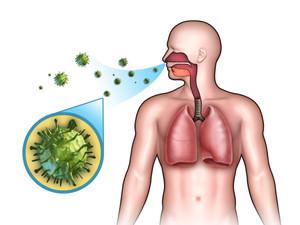 Как передается риновирусная инфекция