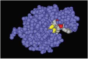 Молекула гидрохлорида лизоцима