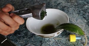 Способы приготовления сока каланхоэ для лечения насморка у детей