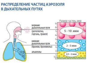 Распределение частиц аэрозоля в дыхательных путях