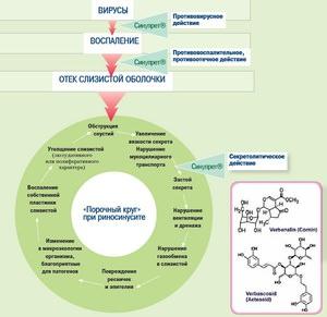 Синупрет - действующее вещество и эффективность