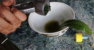 Лечение гайморита в домашних условиях соком Каланхоэ